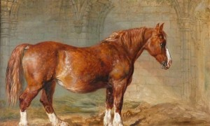 James Ward Suffolk Punch
