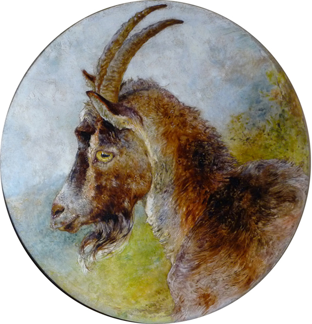 William Huggins Head of a Billygoat